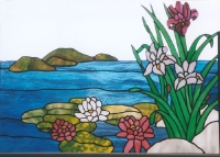 Iris and waterlilies at edge of pond