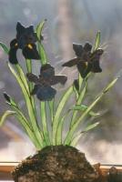 Standing iris
